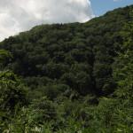 Bild 4. Die bergige Landschaft im Nationalpark Nikkō.