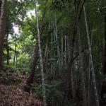 Bild 13. Bambus und Baum, man glaubt es kaum.