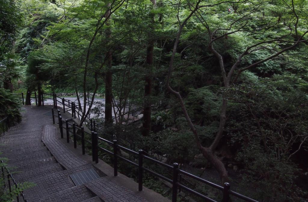 Bild 16. Der Wald in der Tempelanlage.