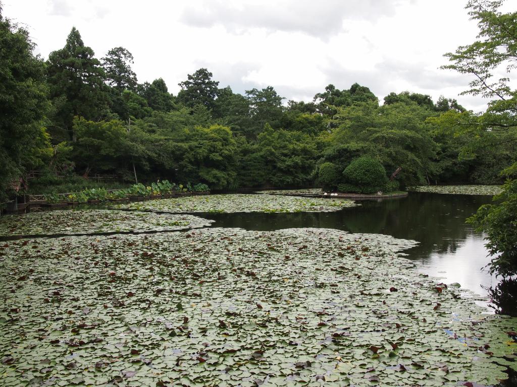 Bild 17. Der Teich und seine Lilien.