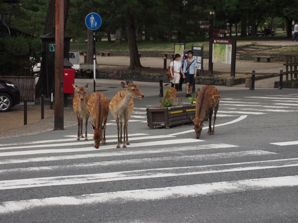 Bild 23. Hier gehört den Rehen/Hirschen die Stadt.