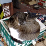 Bild 55. Zwei Katzen, die es gemütlich haben.