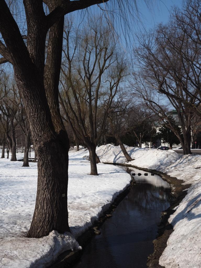 Bild 14. Auf dem Campus der Universität Hokkaido.